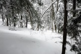 Winter forest picture