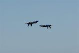 Blue Angels 5 & 6 crossing inverted