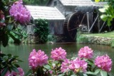 Flower and a watermill