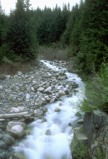 Stream in the Pacific Northwest